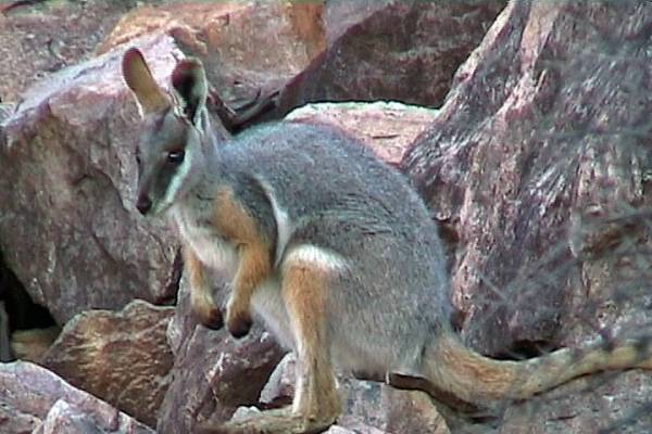 images of australian animals