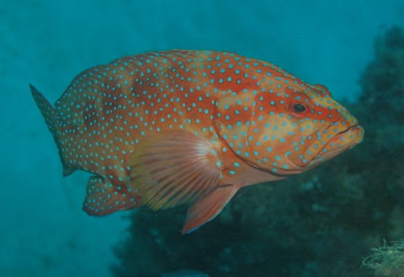 Great Barrier Reef Fish Benefit From Restrictions